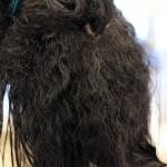 バックウェーブと 捻転毛の縮毛矯正の限界点・・・