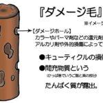 生ケラチン入り高級シャンプーでヘアダメージ修復!?